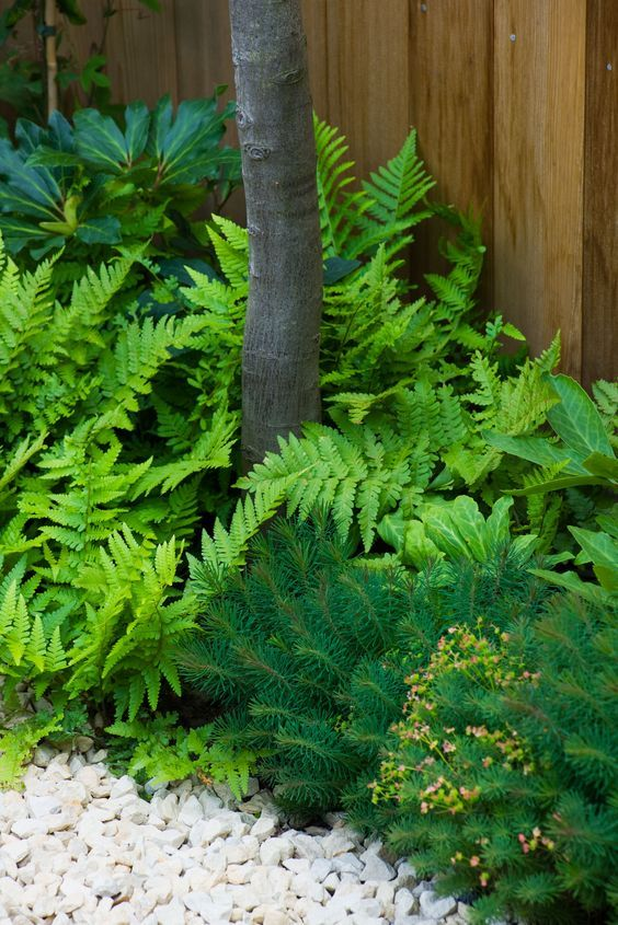 Fern - Dryopteris filix mas with Euphorbia 'Fens Ruby'- great evergreen ground cover and structure.: