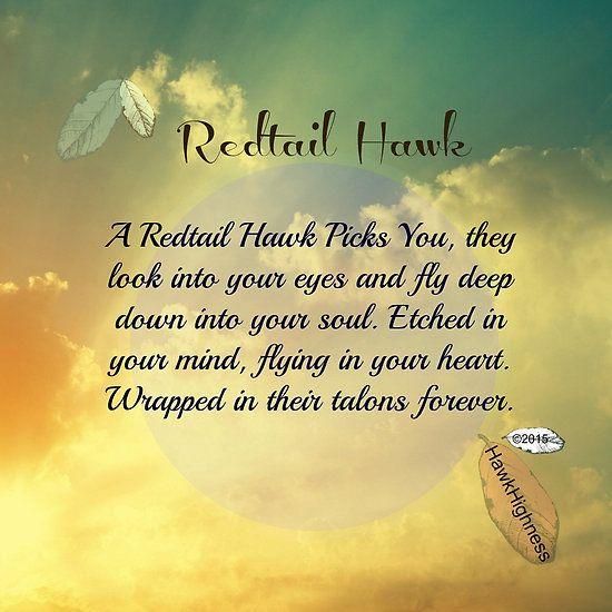 RedTail Hawks Choice