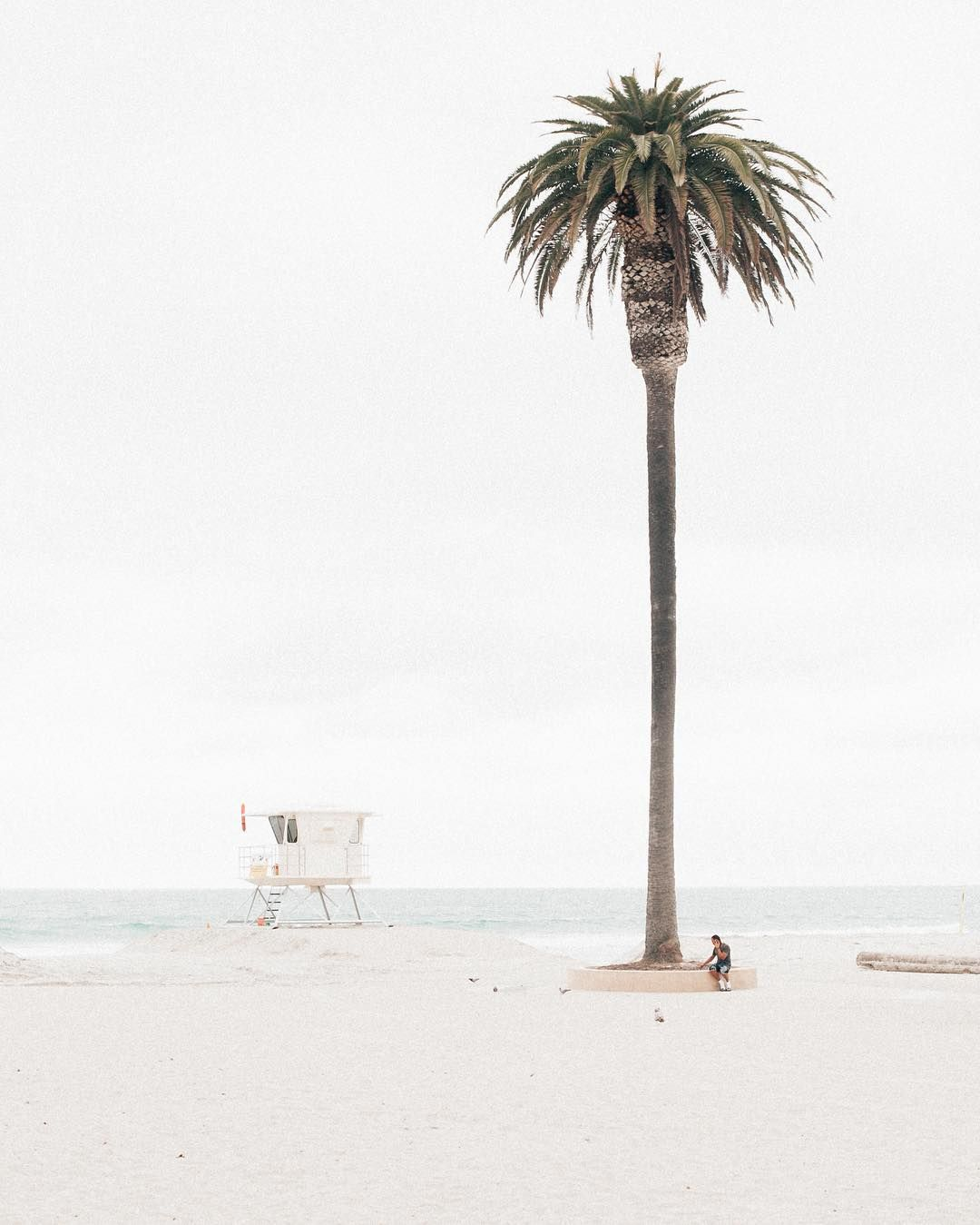 Palm Tree Beach: Pin By Clair Miller On MY TROPICAL OBSESSION