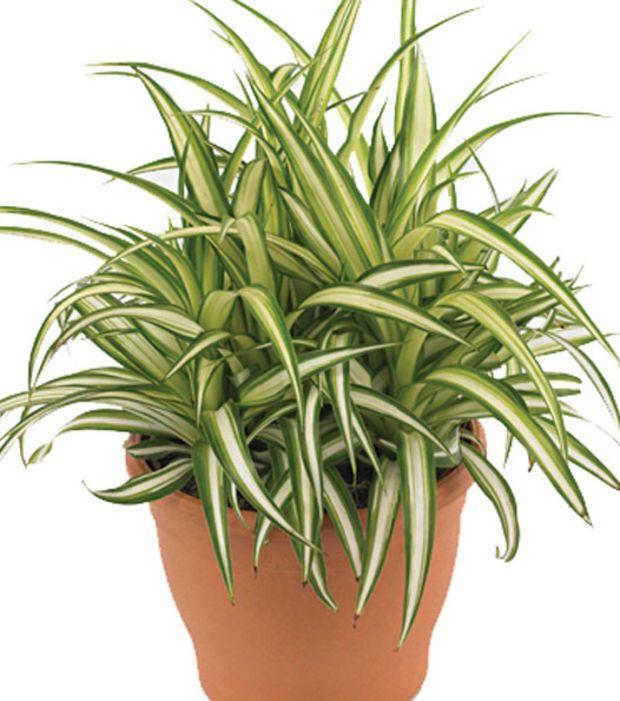 Pin de ale pizarro en plantas y algo mas pinterest for Lista de plantas de sombra
