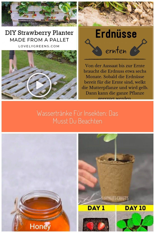 10 Heilkruter Wir Zeigen Euch Die Besten Heilpflanzen Aus Dem Eigenen Garten Gegen Husten Bauchkrmpfewussten Sie Dass Man In 2020 Insekten Heilpflanzen Garten Pflanzen