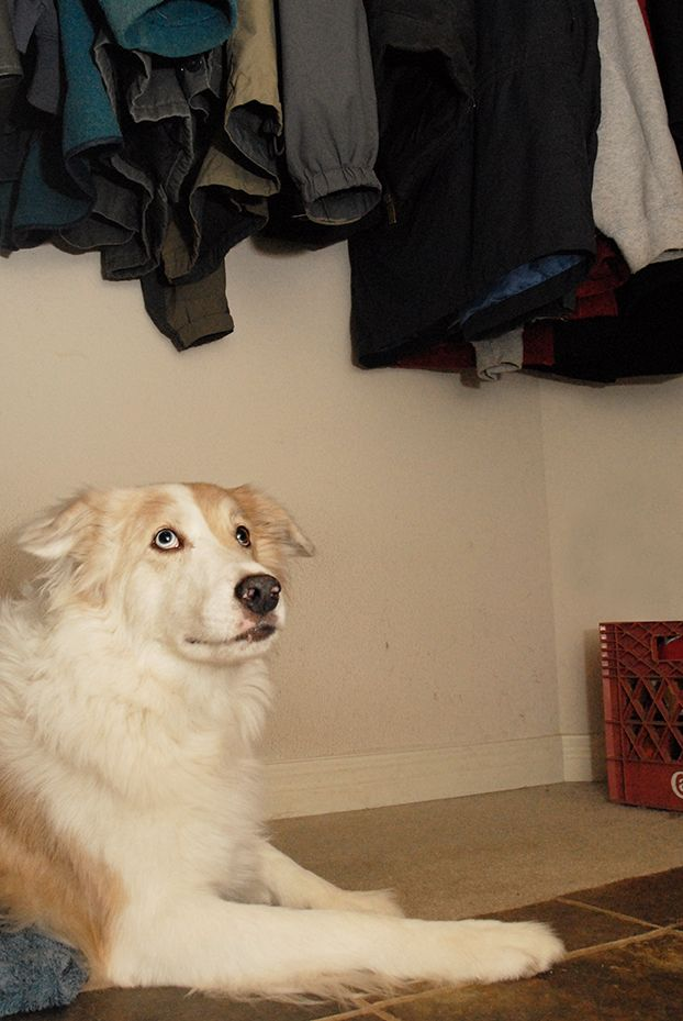 Canine Fears And Phobias Dog Behavior Canine Phobias