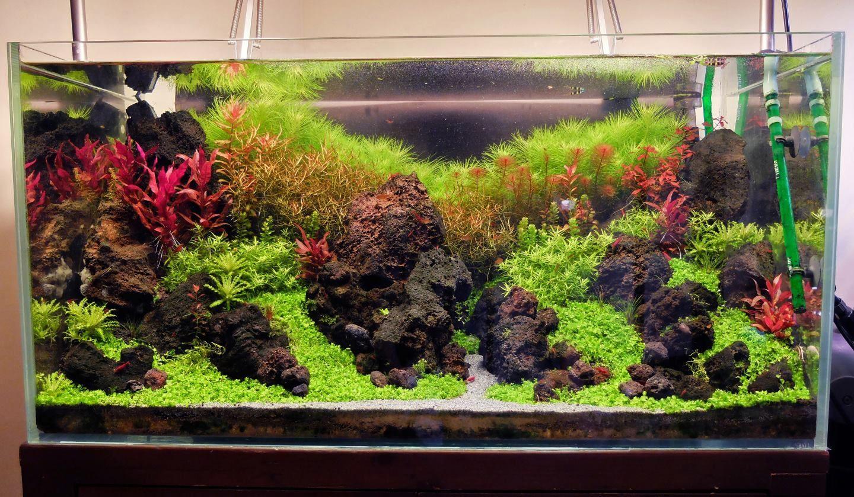 Xzu0027s High Tech + Low Tech Nano Experiments   The Planted Tank Forum
