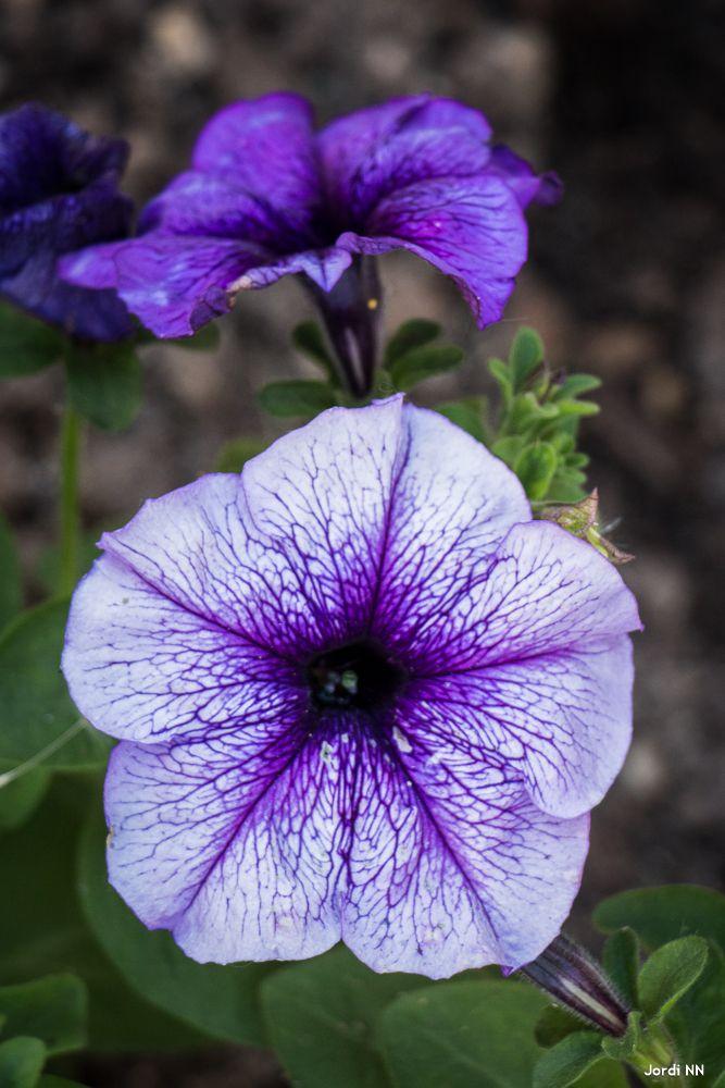 #Flowers / Jordi NN