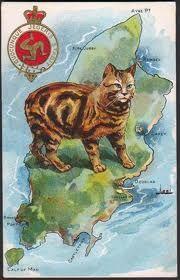 Manx Cat -LOVE THEM !