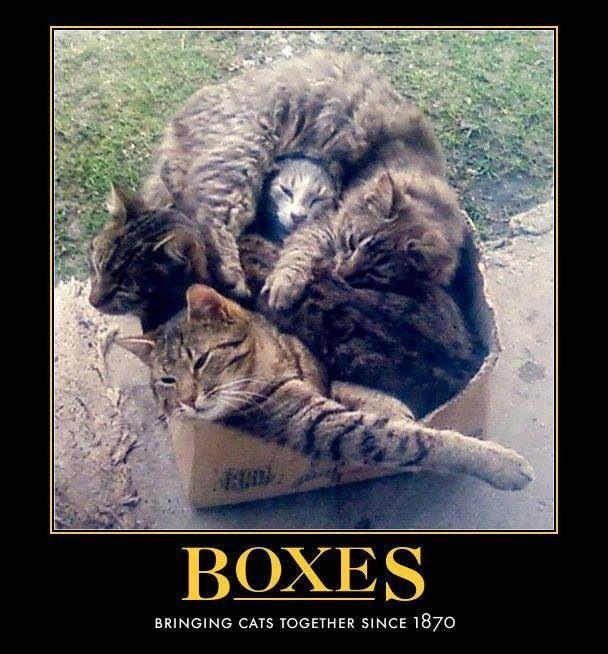 Kitty box!