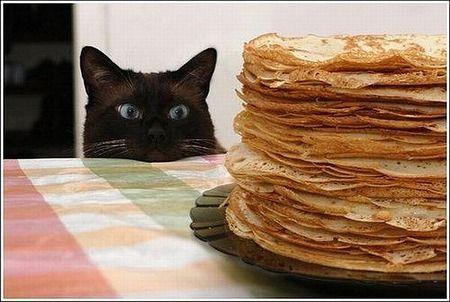 """Résultat de recherche d'images pour """"crepe humour chat"""""""