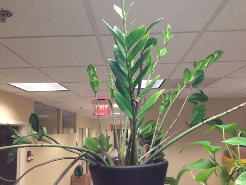 Free Plant Identification Low Light House Plants Plants House