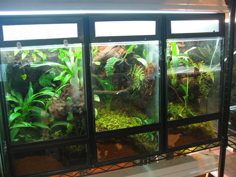 10 gal vertical vivarium tutorial | Frogs, vivs, plants ... 10 Gallon Dart Frog Vivarium