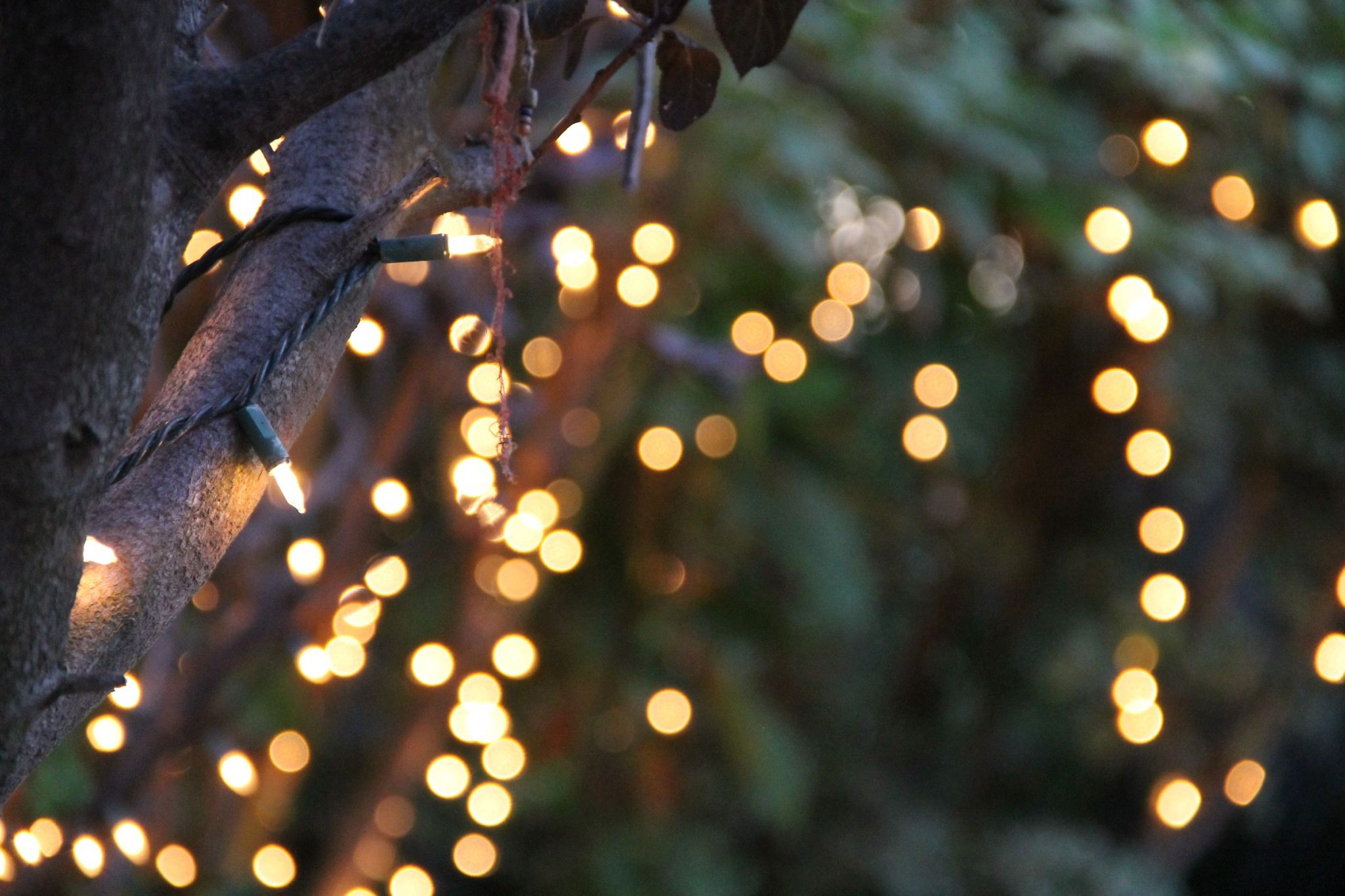 Pin By Ree On Lights Hanging Tree Lights Outdoor Hanging