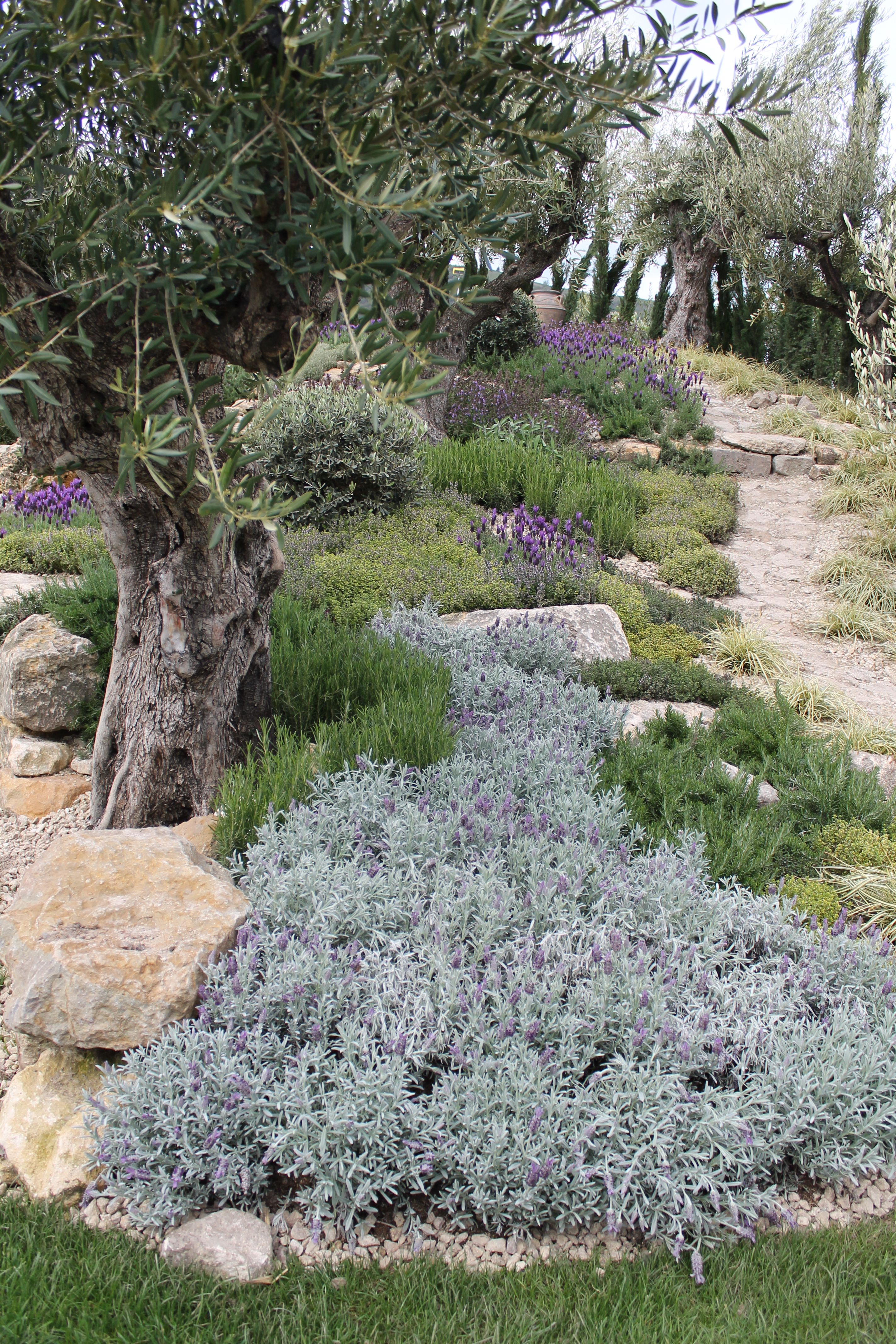 mediterranean garden / Detail planting of olive grove | garden and ...