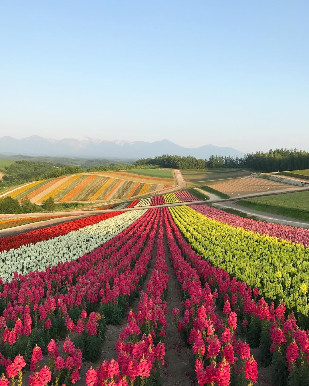 Japan Garden Flowers: Panoramic Flower Gardens Shikisai-no-oka