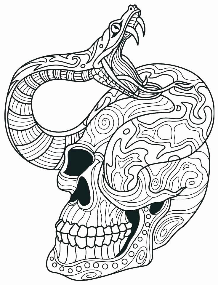 Animal Sugar Skull Coloring Pages Snake Coloring Pages Skull Coloring Pages Shopkins Colouring Pages