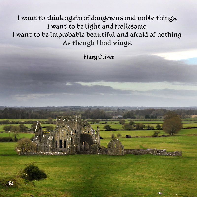 """""""I want to think again of dangerous and noble things. I want to be light and frolicsome. I want to be improbable beautiful and afraid of nothing, as though I had wings."""" ―Mary Oliver Photo: Hoare Abbey, a ruined Cistercian monastery near the Rock of Cashel, County Tipperary, Ireland. 2012."""