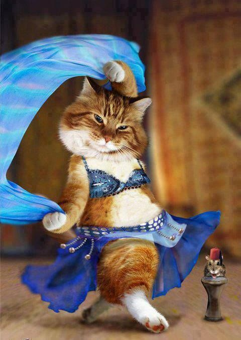 Fatima the cat in her exotic belly dancing outfit. Funny