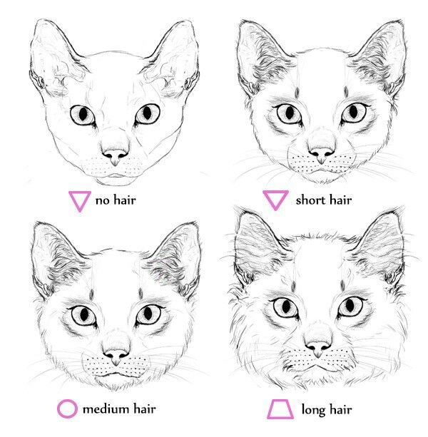 Pin By Daime On Art Technique With Images Cat Drawing Tutorial