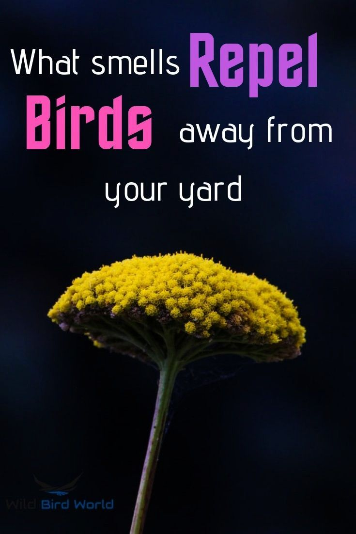 smells repel birds away from your yard Birds are beautiful creatures but they can often be a nuisance and even a danger around your home or yard Keeping birds away usuall...