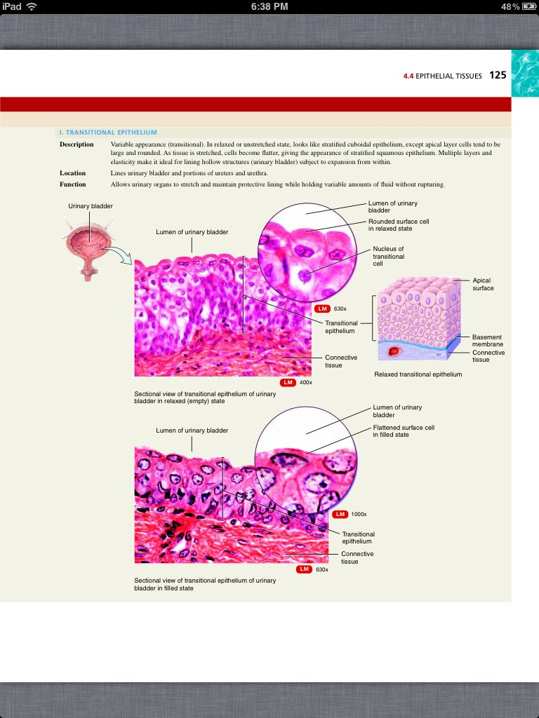 Principles of Anatomy and Physiology, Chapter 4, The Tissue Level of ...