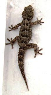 Goodreads & Geckos