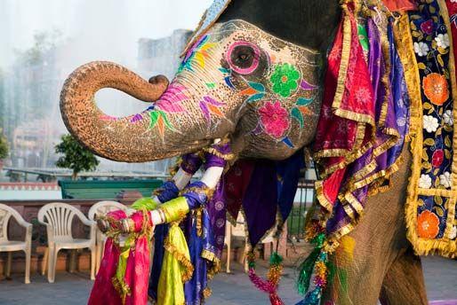 Service Unavailable India Tour Holi Festival Of Colours Holi Festival