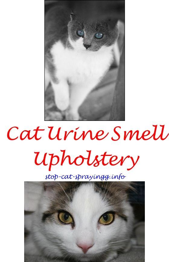 cats eyelids swollen