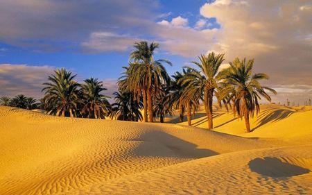 デザートオアシスチュニジア 砂漠 自然 高解像度で壁紙