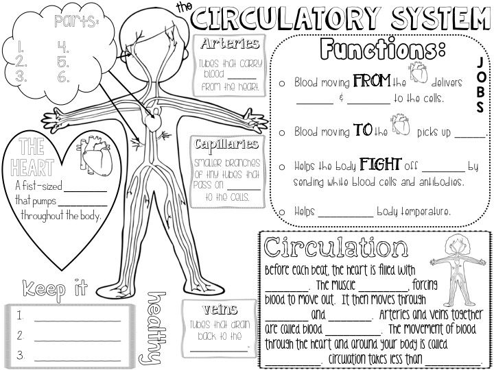 Circulatory System Unit: Heart, blood, blood vessels