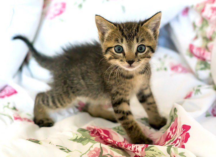 Pregnant Cat Care An Expert Guide To What To Expect Kittens