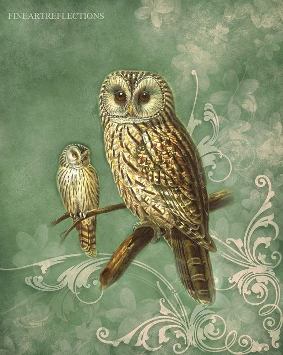 'Two Owls' by Fineartreflections
