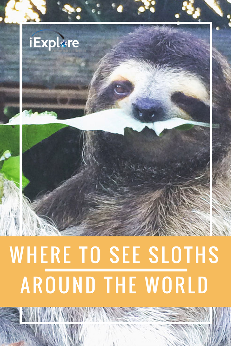 Elephants and lions are so last year, but sloths...
