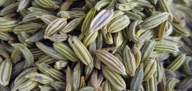 فوائد بذور الشمر موسوعة موضوع Herbs Plants Fennel