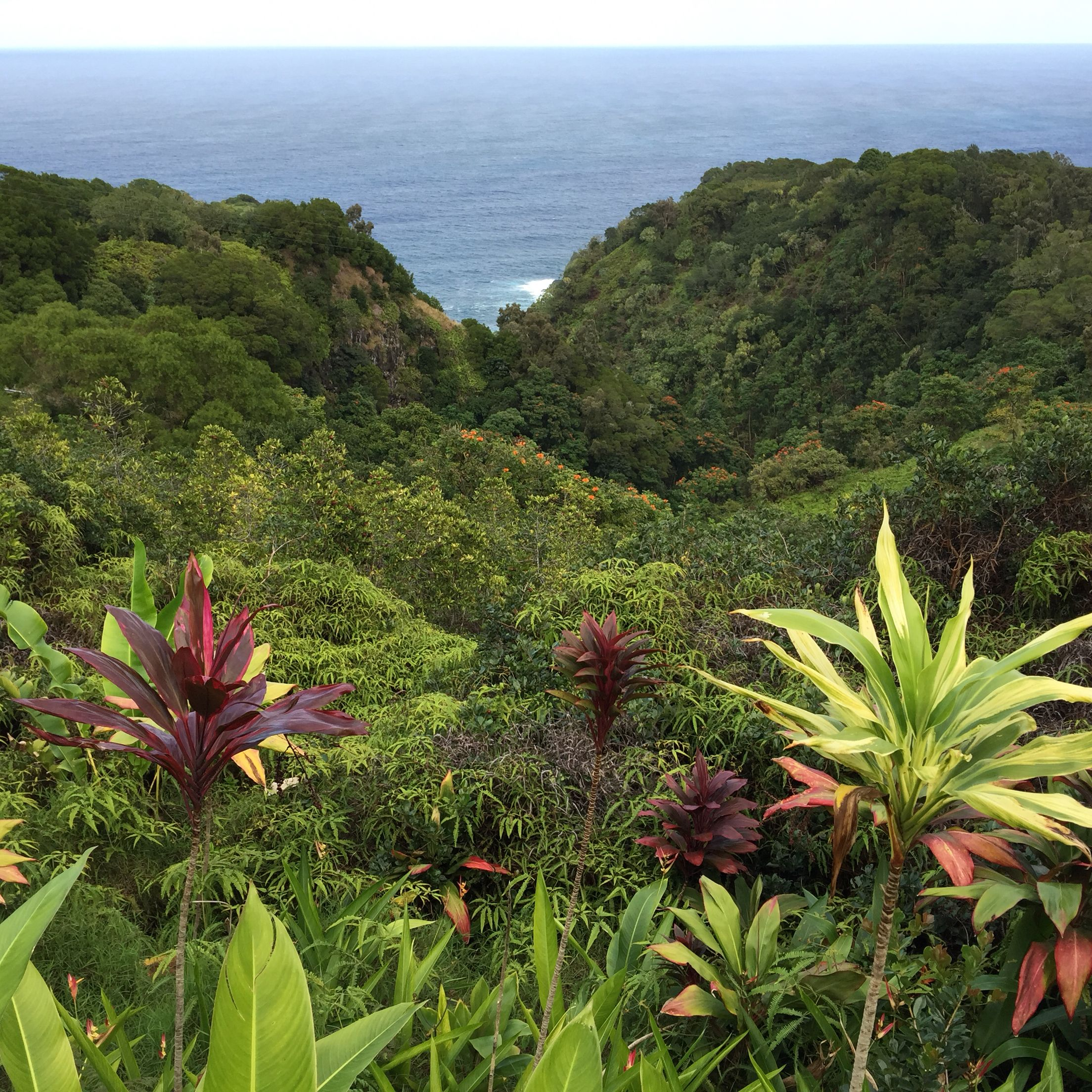acaf3f8948ab421ebf8d3f3e9752d394 - Hana Maui Botanical Gardens Hana Hi