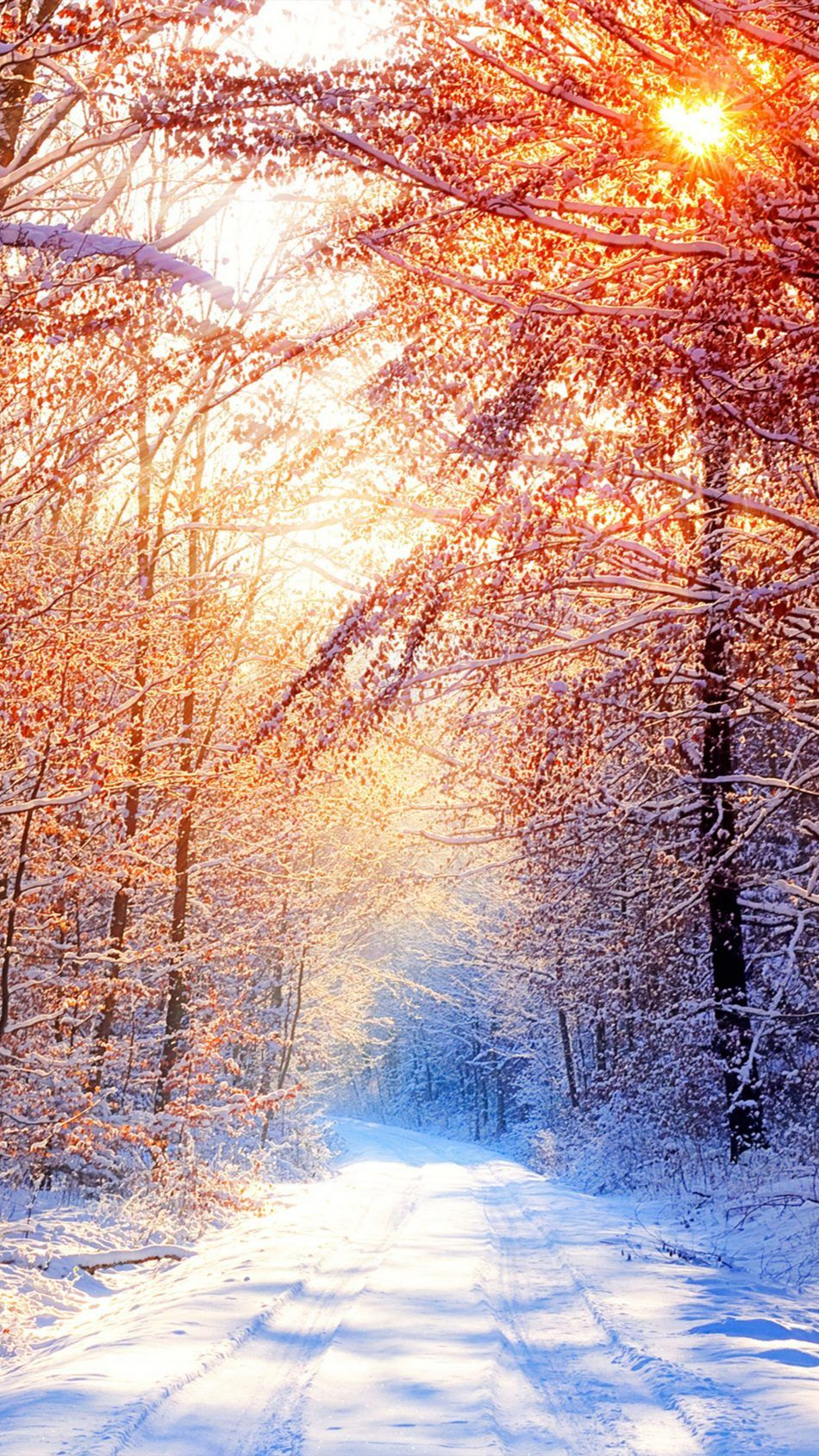 Snow Trees Winter Morning 4k Ultra Hd Mobile Wallpaper Iphone Wallpaper Winter Winter Wallpaper Winter Iphone