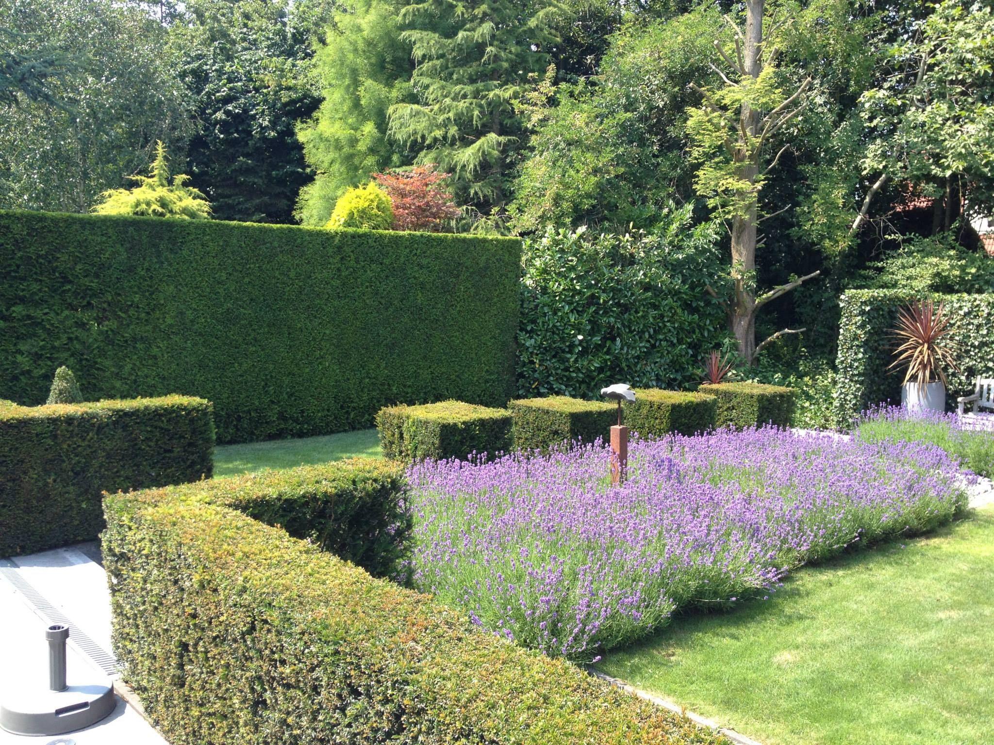 Tuin hovenier geometrie snoeien vormsnoeien paars for Tuin snoeien