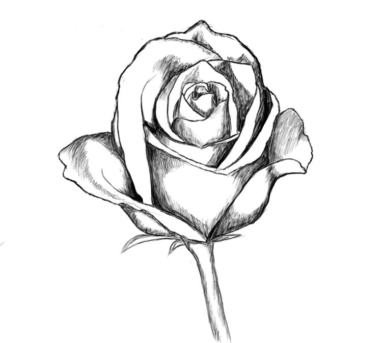 How To Draw A Rose Includes A Video Tutorial In Case You Ve Never Drawn One But Want To At Drawcentra Roses Drawing Flower Drawings With Color Rose Drawing