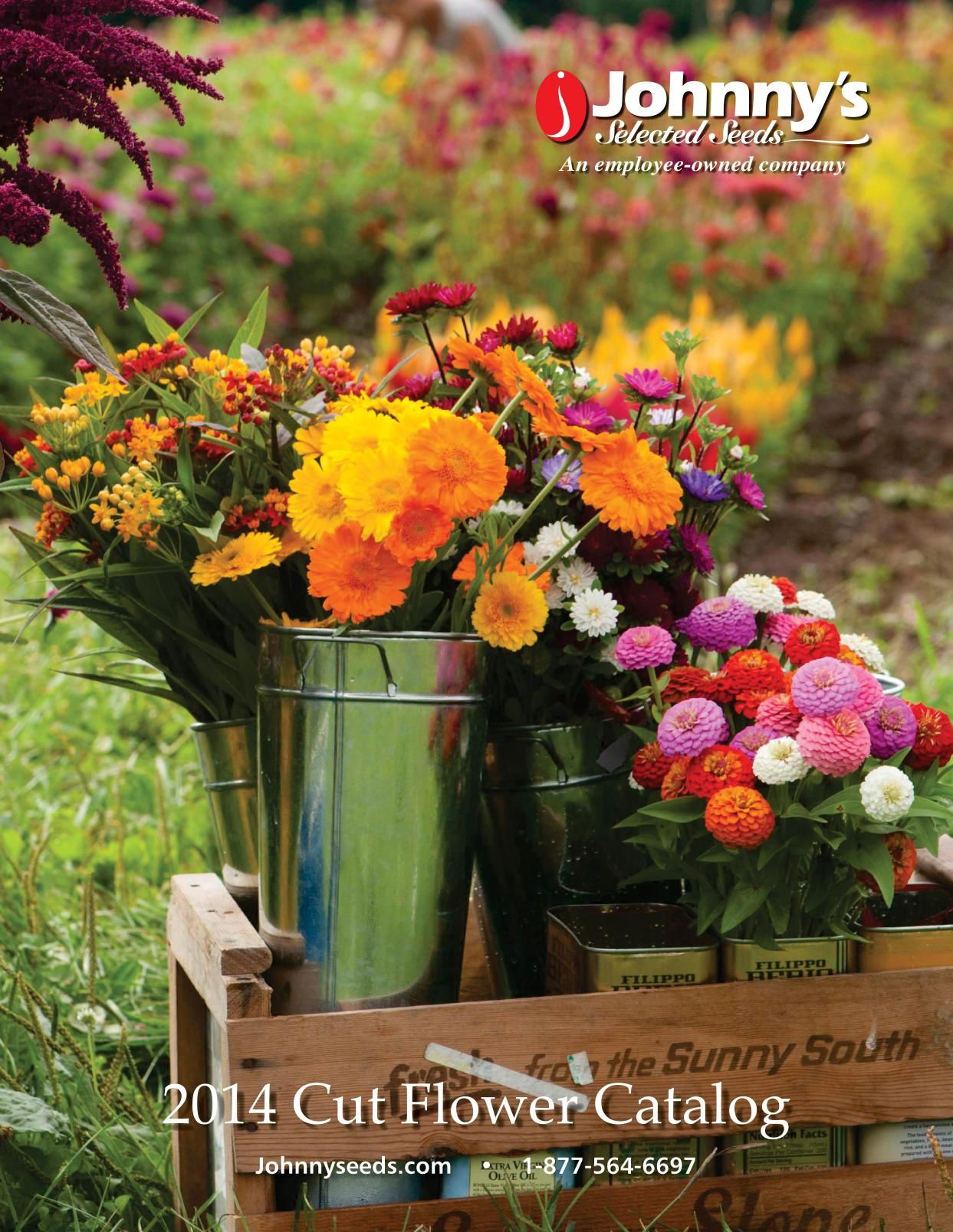 Cut Flowers 2014 Catalog Johnnys Selected Seeds Detailed Growing