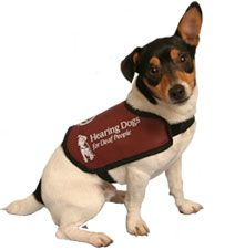 Hearing Dogs For The Deaf Man S Best Friend Helps Again Dogs