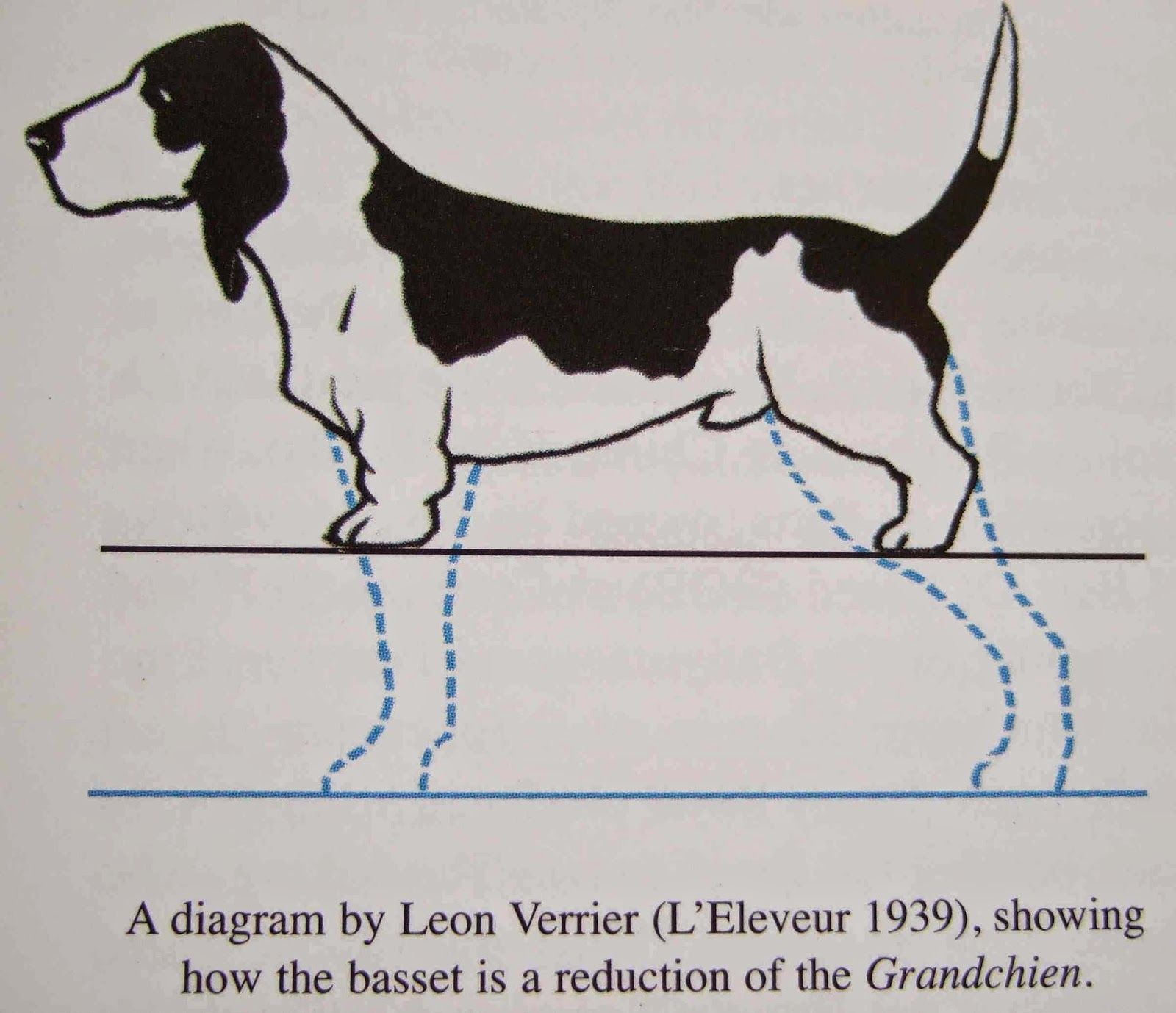 Basset Hound evolution - Pesquisa Google