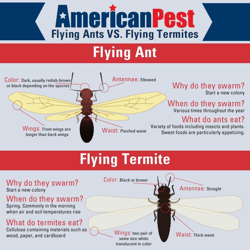 the true story of ants vs termites american pest gallery termite rh pinterest com