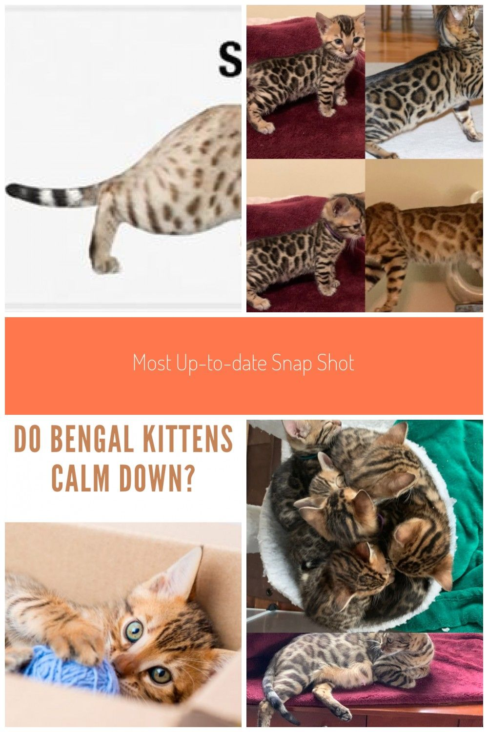 Most Up To Date Snap Shots Bengal Cats Colors Concepts Primary Let