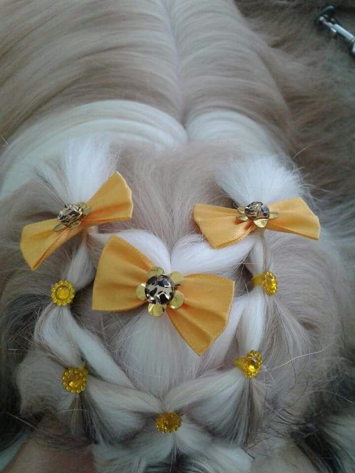 Repinned Top Knot Grooming Pinterest Shih Tzu Dogs And Dog