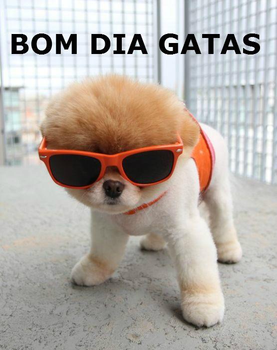 Bom Dia Frases Engraçadas Pesquisa Google Cachorro Perros
