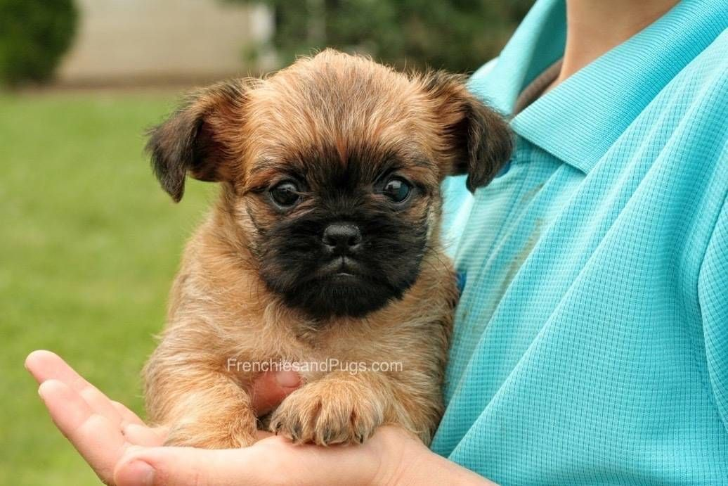If You Want Cute Puppies For Your Homes Then Visit