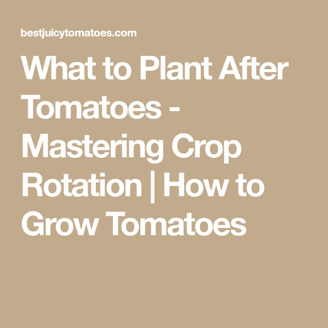 What To Plant After Tomatoes Mastering Crop Rotation How To Grow Tomatoes Growing Tomatoes Crop Rotation Growing Organic Tomatoes