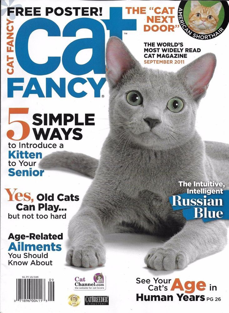 Cat Fancy Magazine Russian Blue Kitten And Senior Age Related
