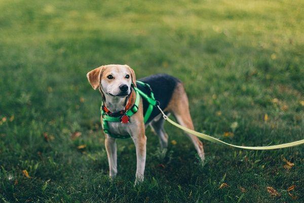 Szelki Dla Psa Wszystko Co Powinnismy O Nich Wiedziec Psy Dog