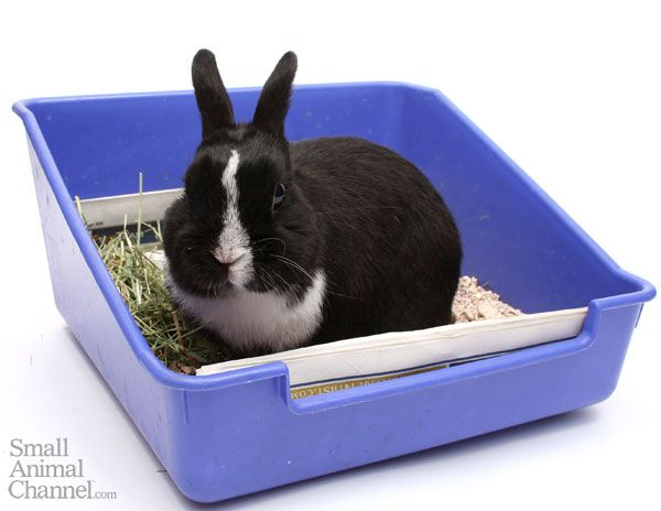 How Often And How Well You Clean Your Rabbit39s Litter Box