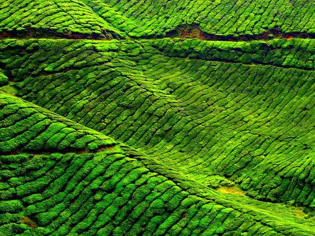 Kate Cameron highlands, Green, Beautiful sites