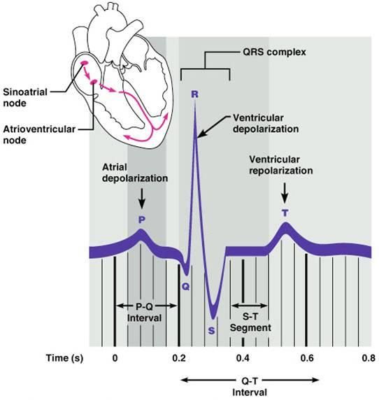 P Wave Electrocardiography