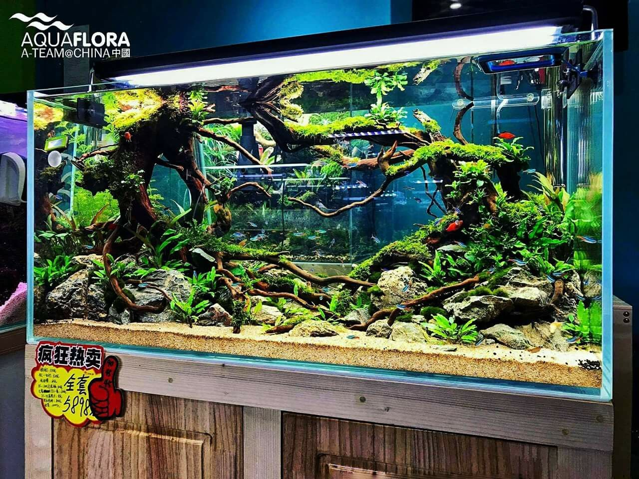 Inspiring Aquascape At Guangzhou Market In China Aquaflora